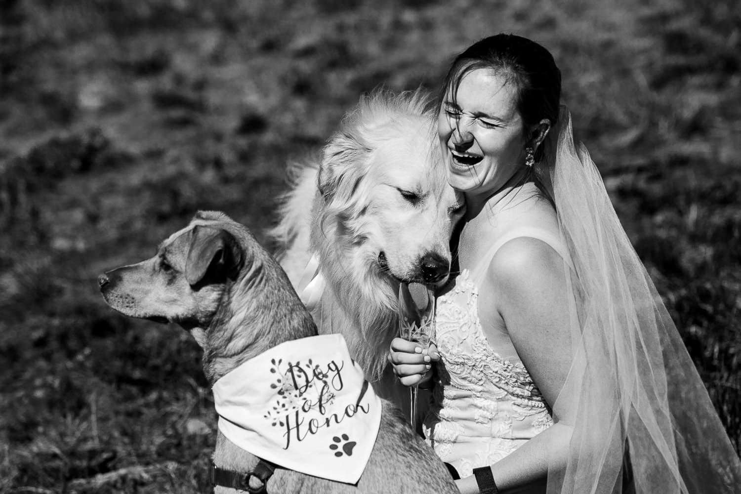 A bride laughs as her dog drinks from her champagne glass at her elopement.