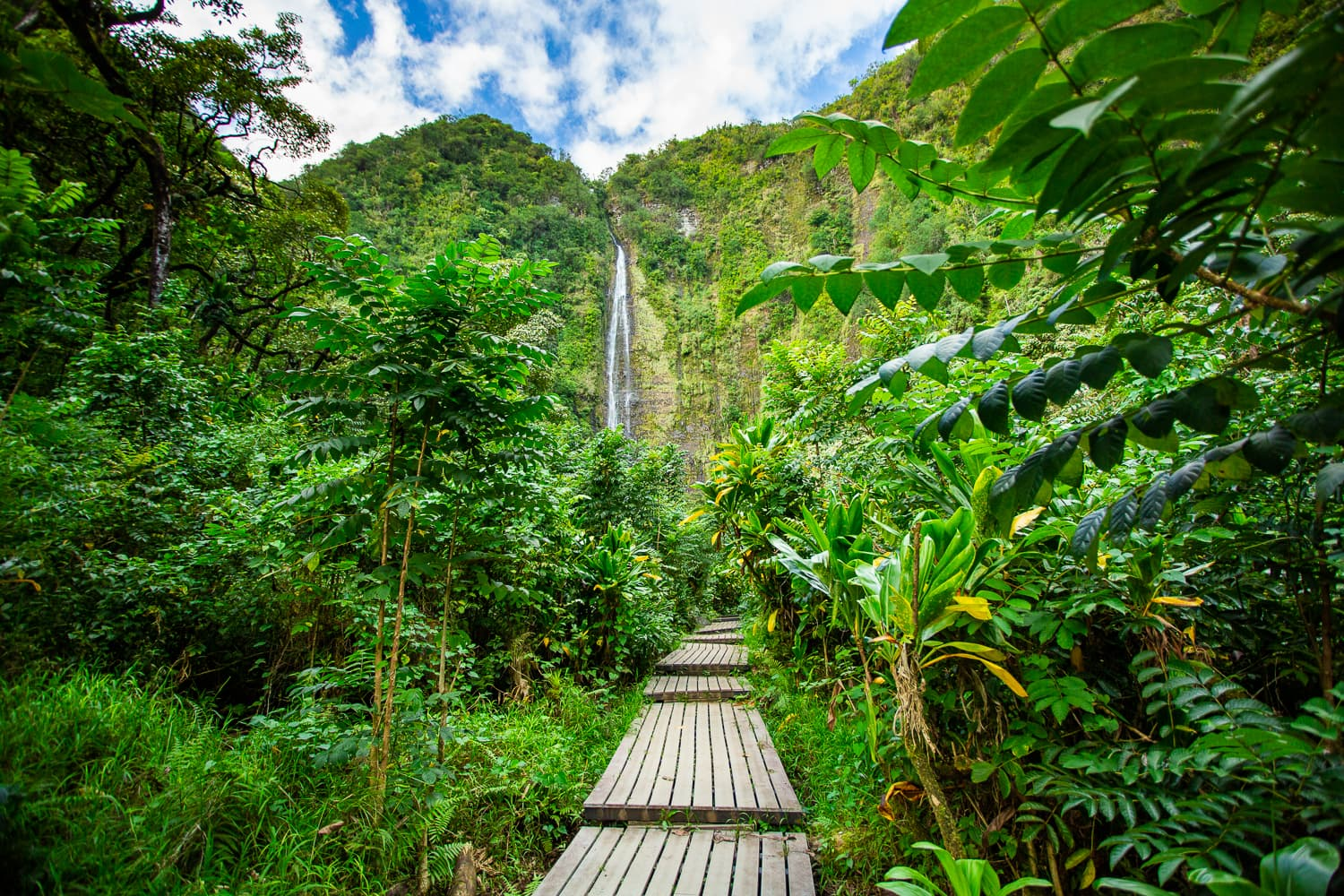 view of Waimoku falls with jungle on either side of a central boardwalk.