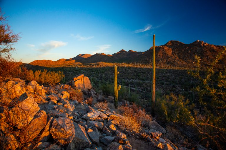 How to Elope in Saguaro National Park
