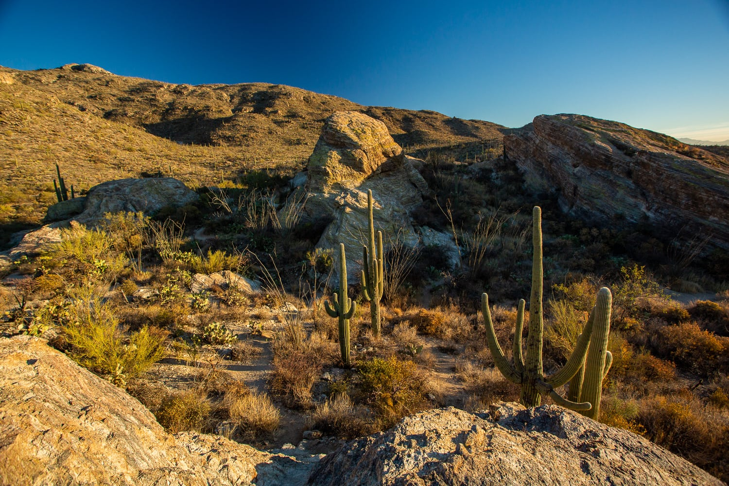 An east saguaro national park elopement location