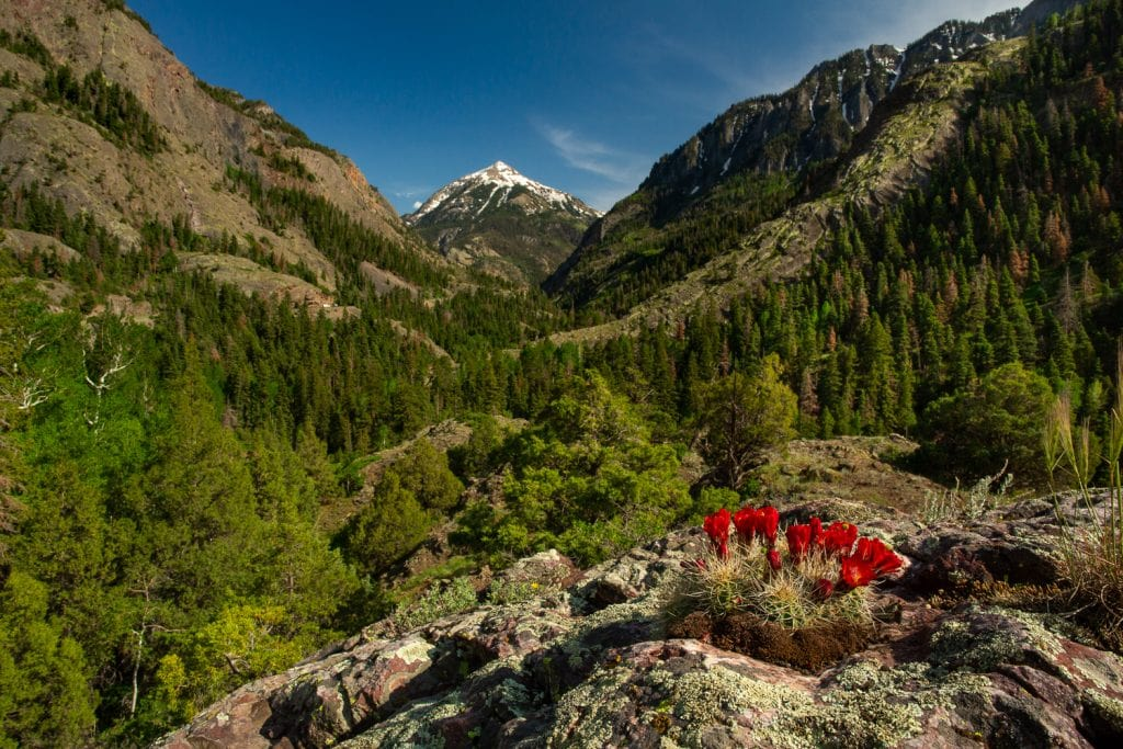 An amazing elopement location in Ouray, Colorado, with mountains and flowers.
