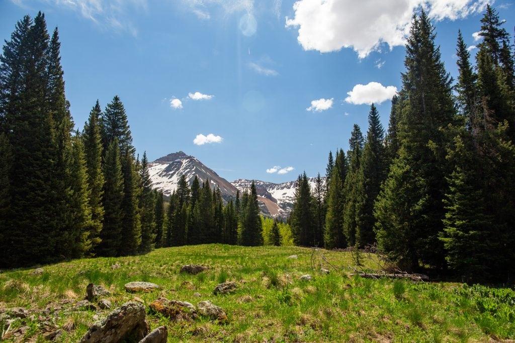 A mountain meadow in summertime in colorado.