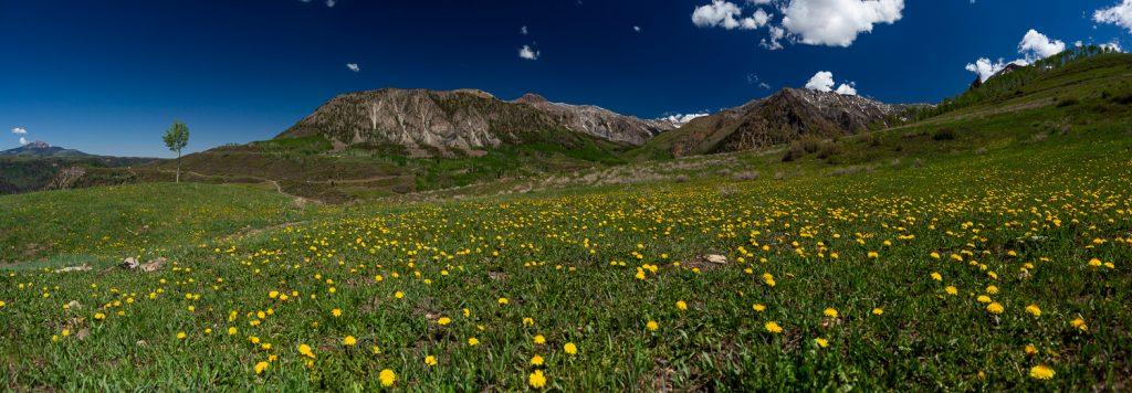 A field of wildflowers in telluride, Colorado.