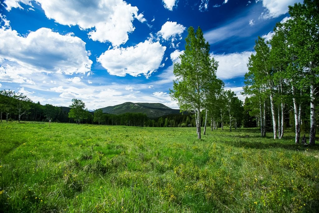 A green meadow with aspen trees and mountains in the background.