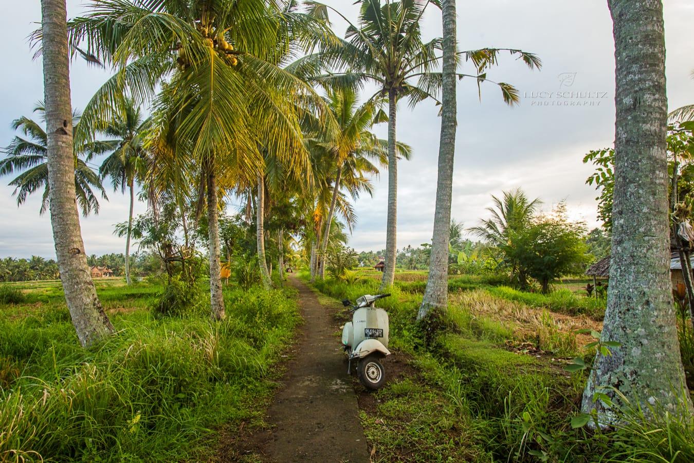 Adventures in Bali 4: Tanah Lot, Uluwatu, Ubud & Padangbai – Travel Photographer