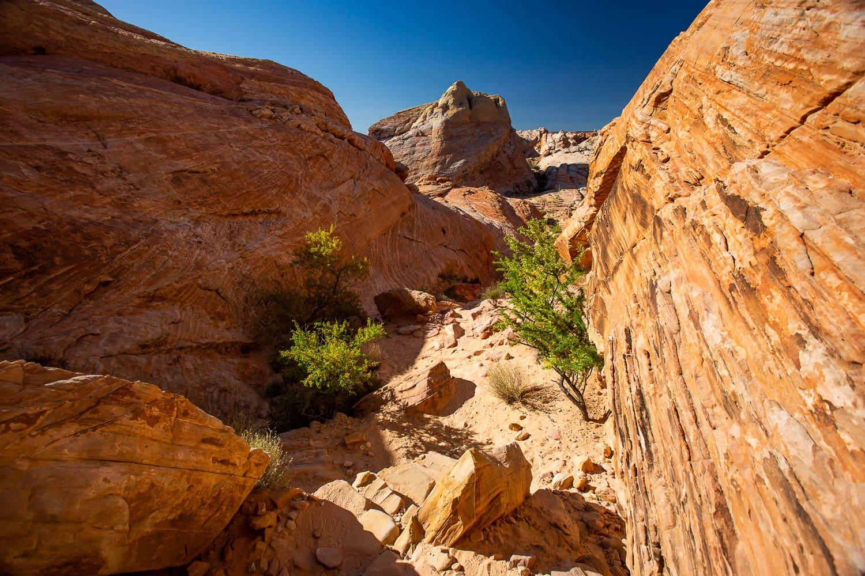 Where Should We Elope? Colorado & Destination Elopement Photographer