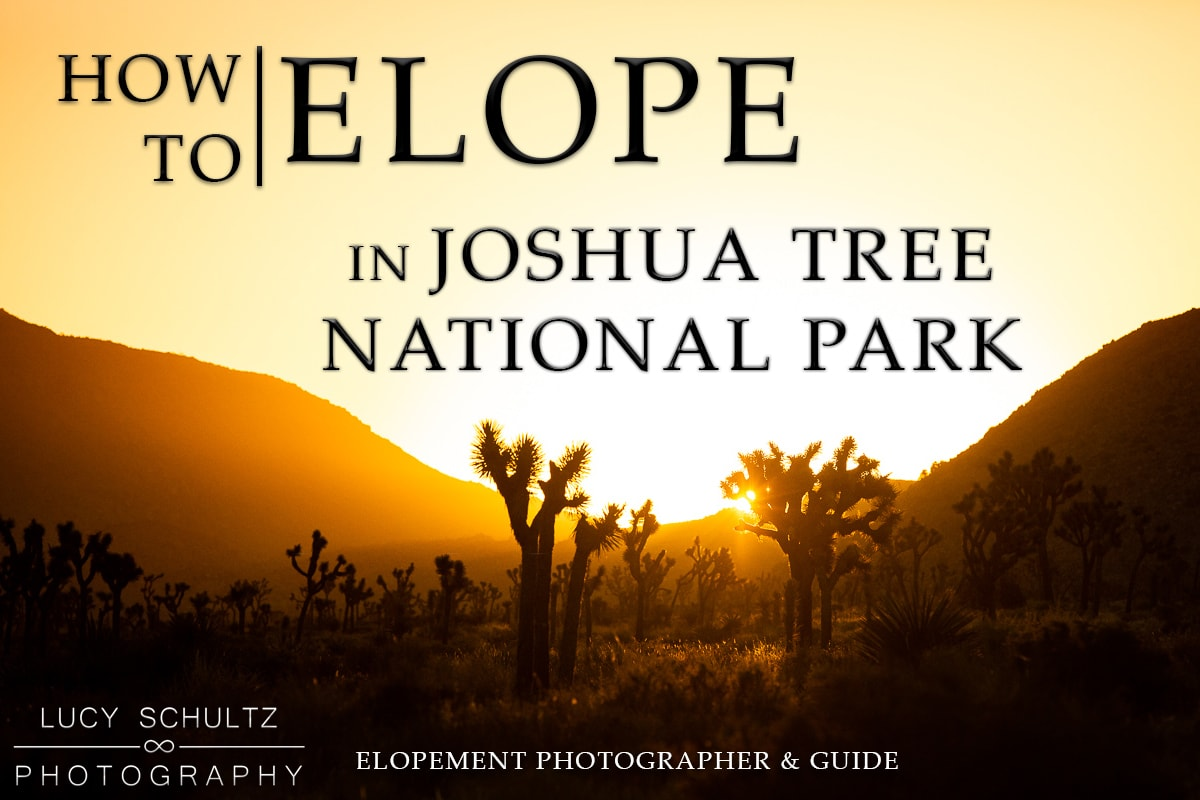 How to Elope in Joshua Tree National Park