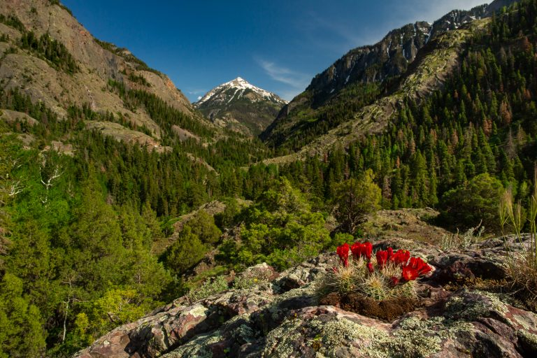 Ouray Elopement Locations Guide